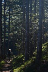 7 Un tratto di bosco sul sentiero natura