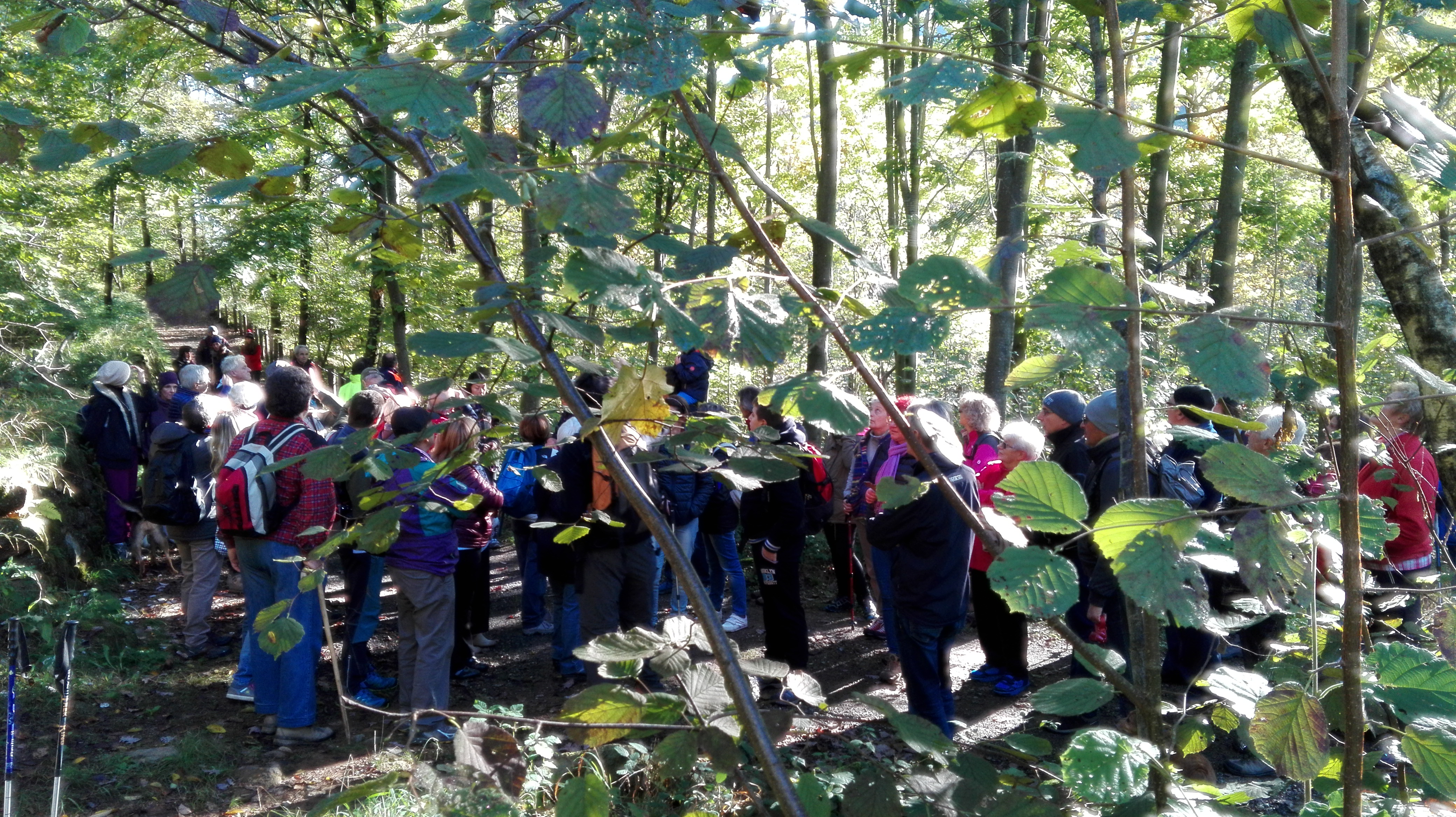 Alle sorgenti del ceronda ata associazione tutela ambiente for Alberi simili alle querce